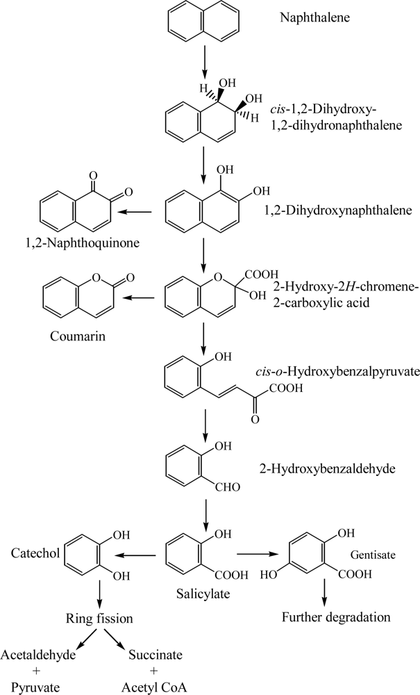 ijerph free full text bacterial degradation of aromatic