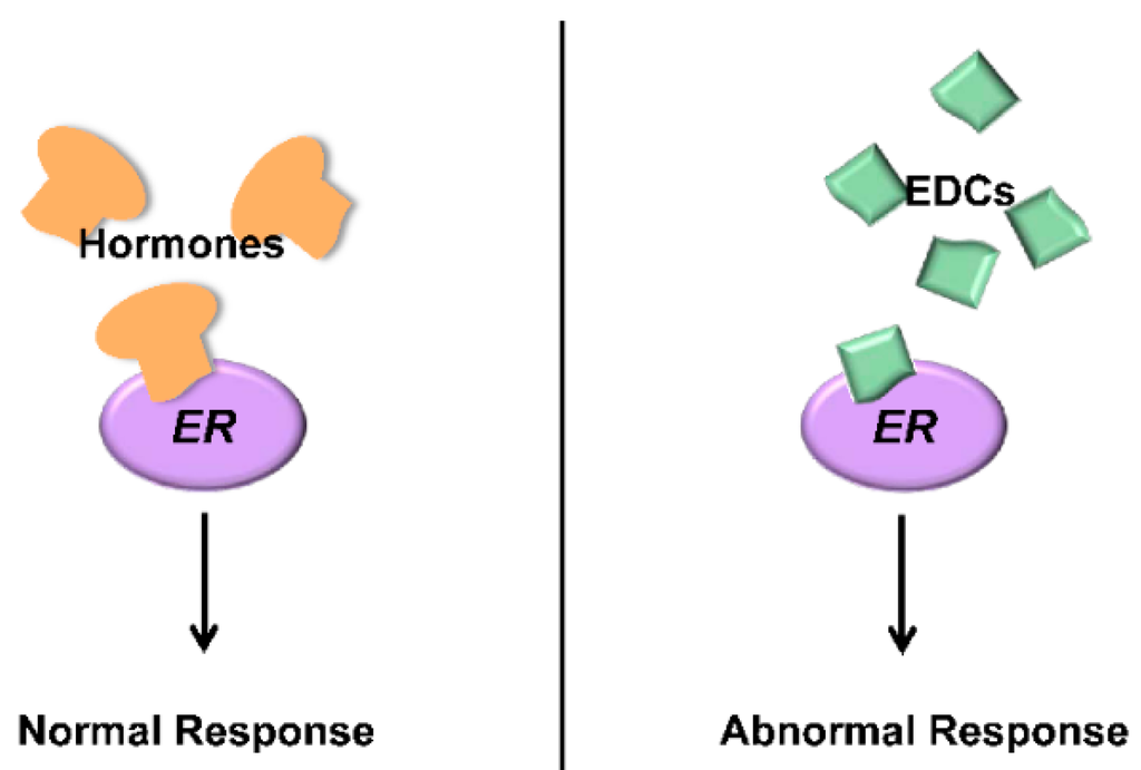 Estrogen receptor assay kit