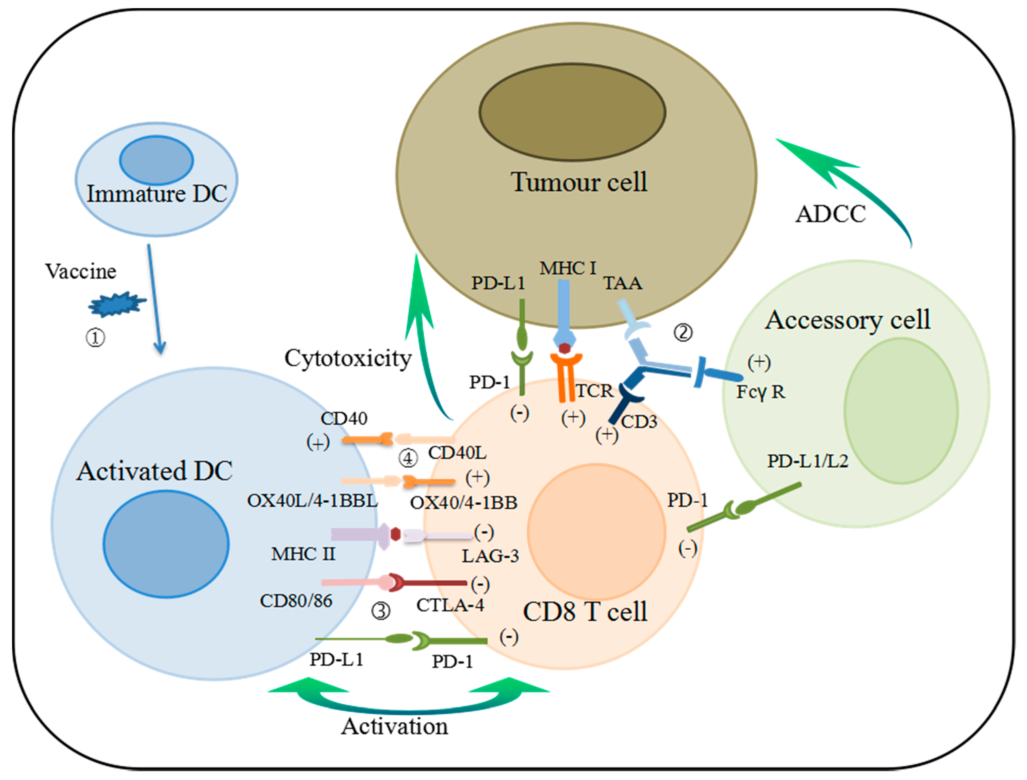 Ijerph Free Full Text New Immunotherapy Strategies In