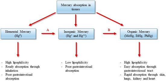 Mercury Exposure and Heart Diseases