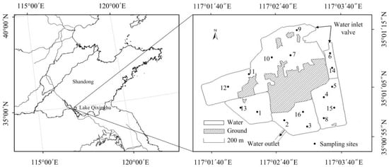 Phytoplankton Diversity Effects on Community Biomass and Stability along Nutrient Gradients in a Eutrophic Lake