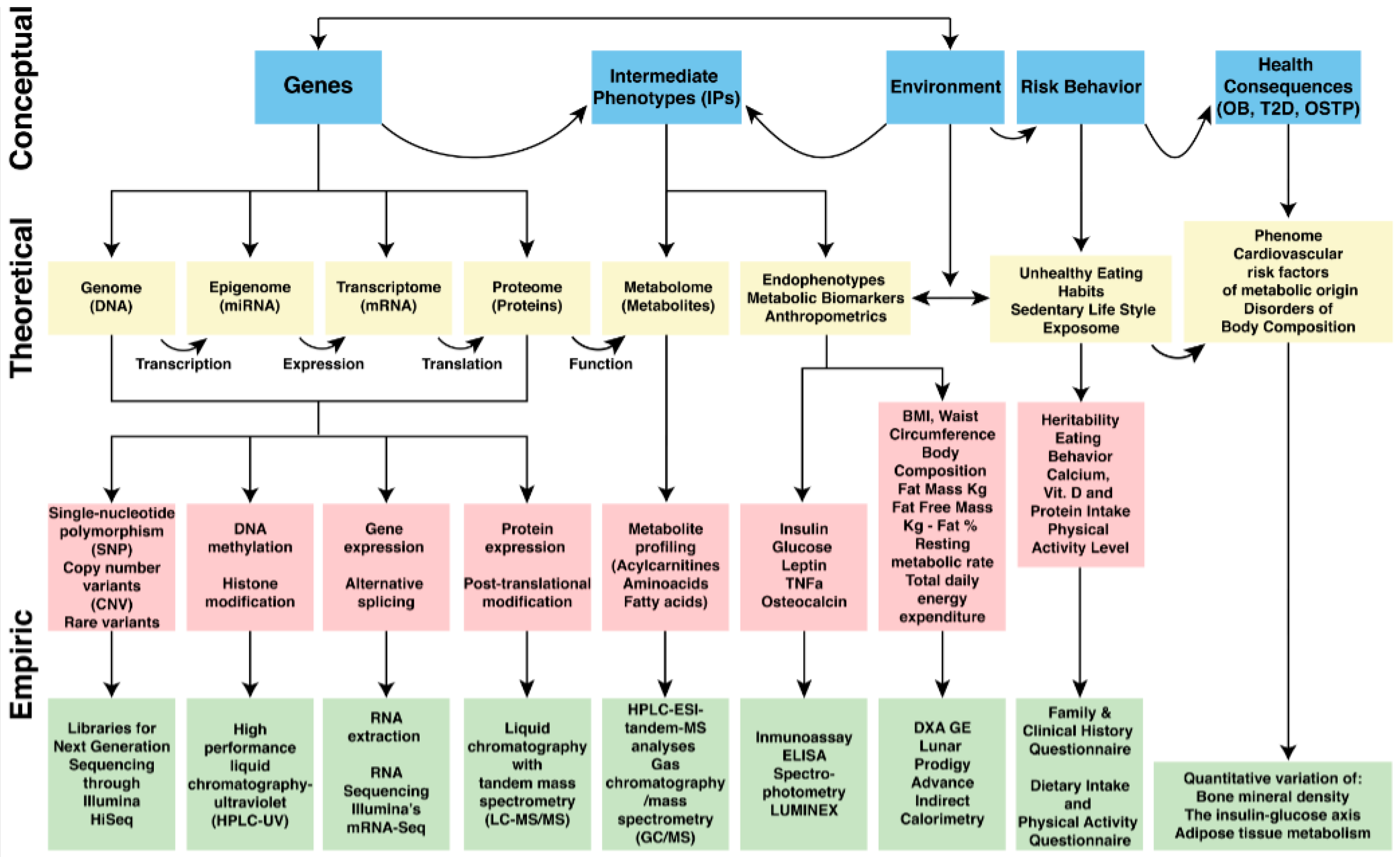 Ijerph Free Full Text Mini Review The Contribution Of Intermediate Phenotypes To Gxe