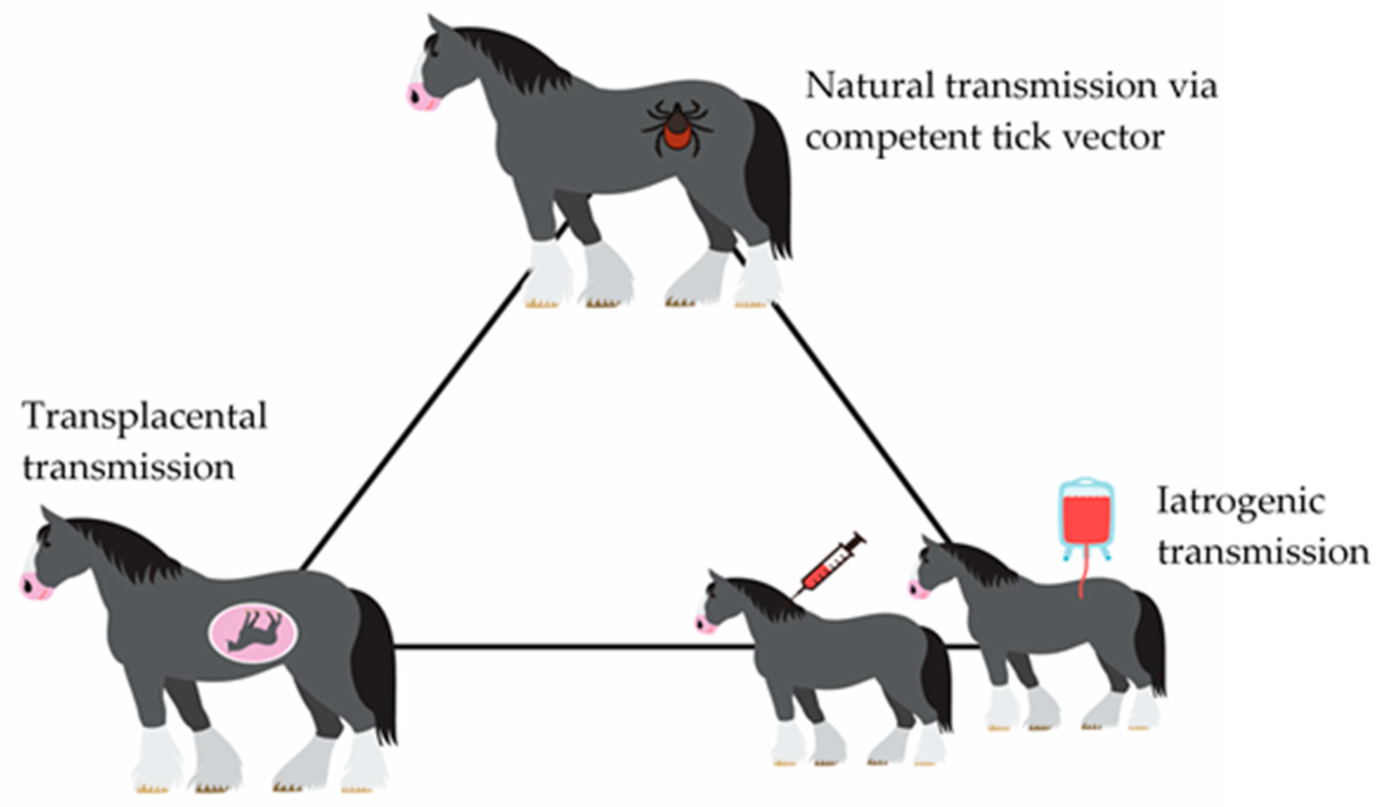 IJERPH | Free Full-Text | A Review on Equine Piroplasmosis