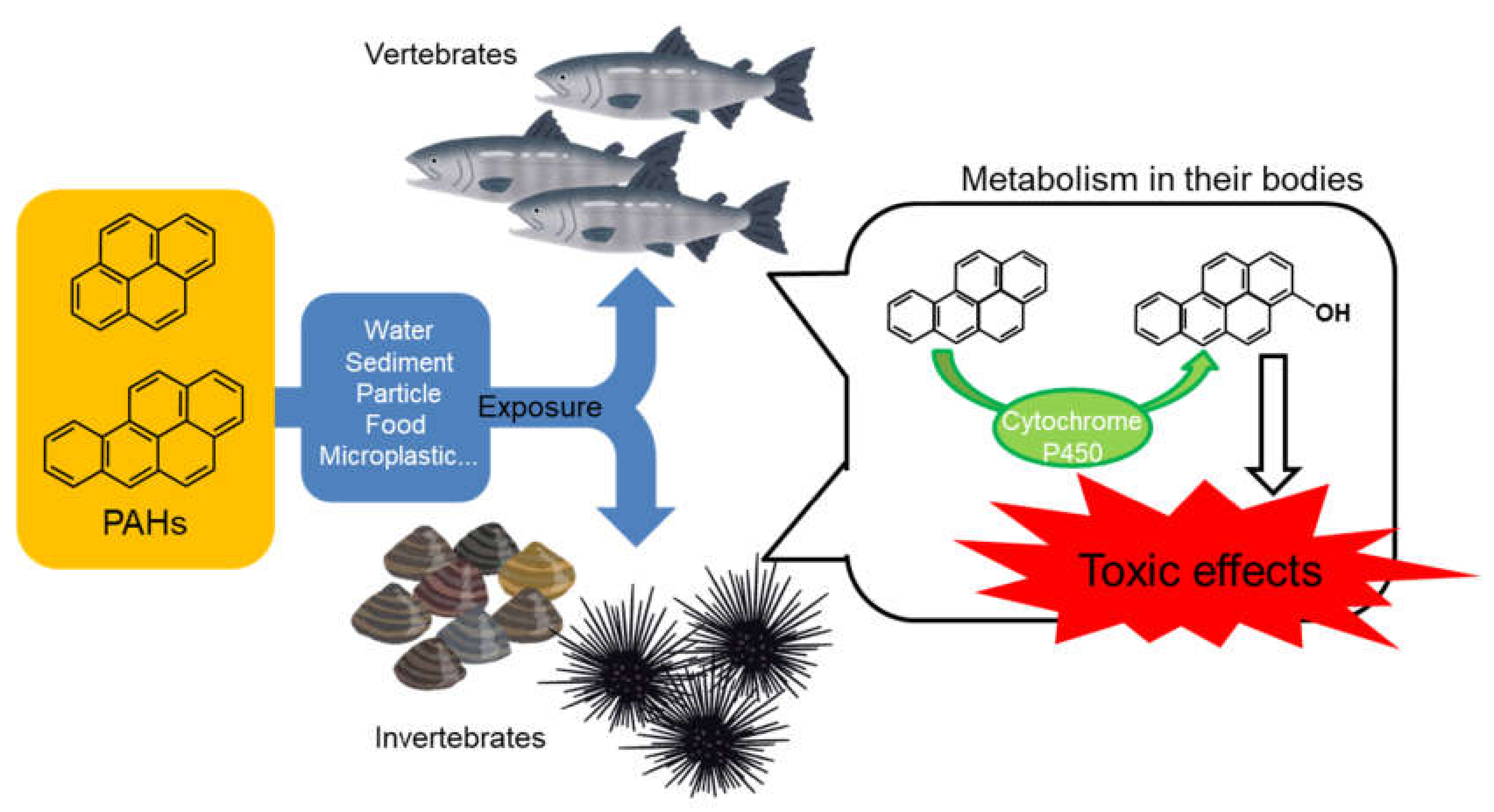 Ijerph Free Full Text Toxicities Of Polycyclic Aromatic Hydrocarbons For Aquatic Animals Html