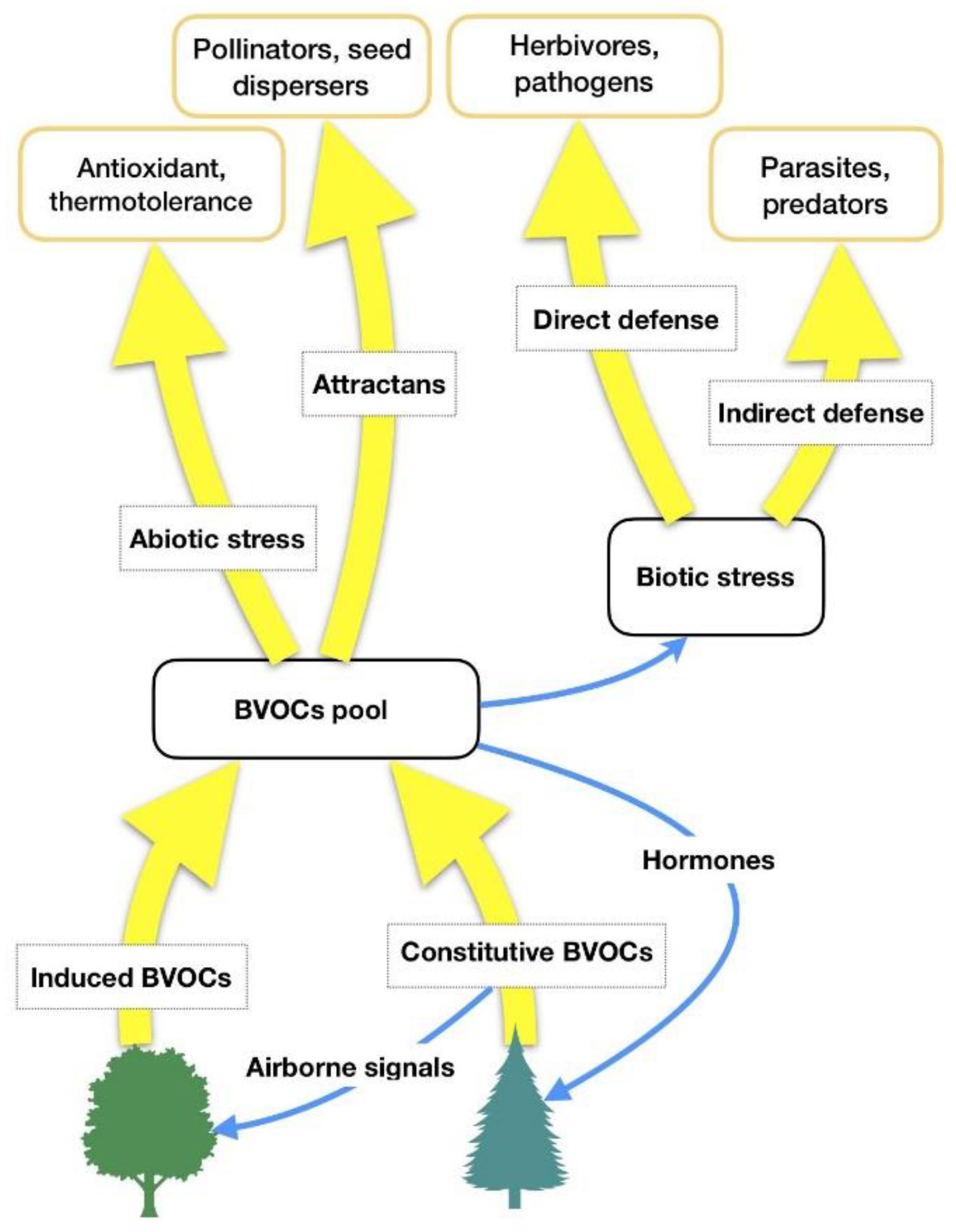 Ijerph Free Full Text Forest Volatile Organic Compounds And Their Effects On Human Health A State Of The Art Review Html