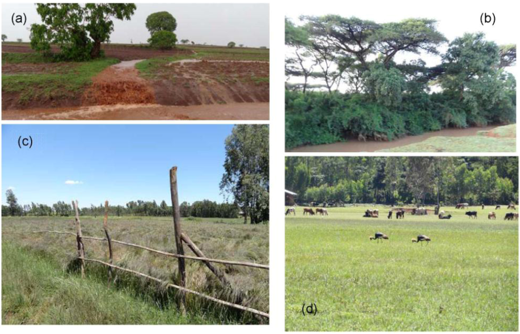 land use and land cover in ethiopia environmental sciences essay Land use classification and analysis using radar data mining in ethiopia  environmental science and public policy, george mason university, 4400 university drive.