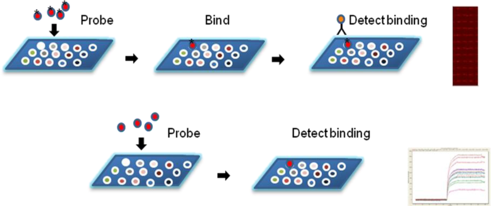 Protein Microarray Influenza Protein Microarrays And