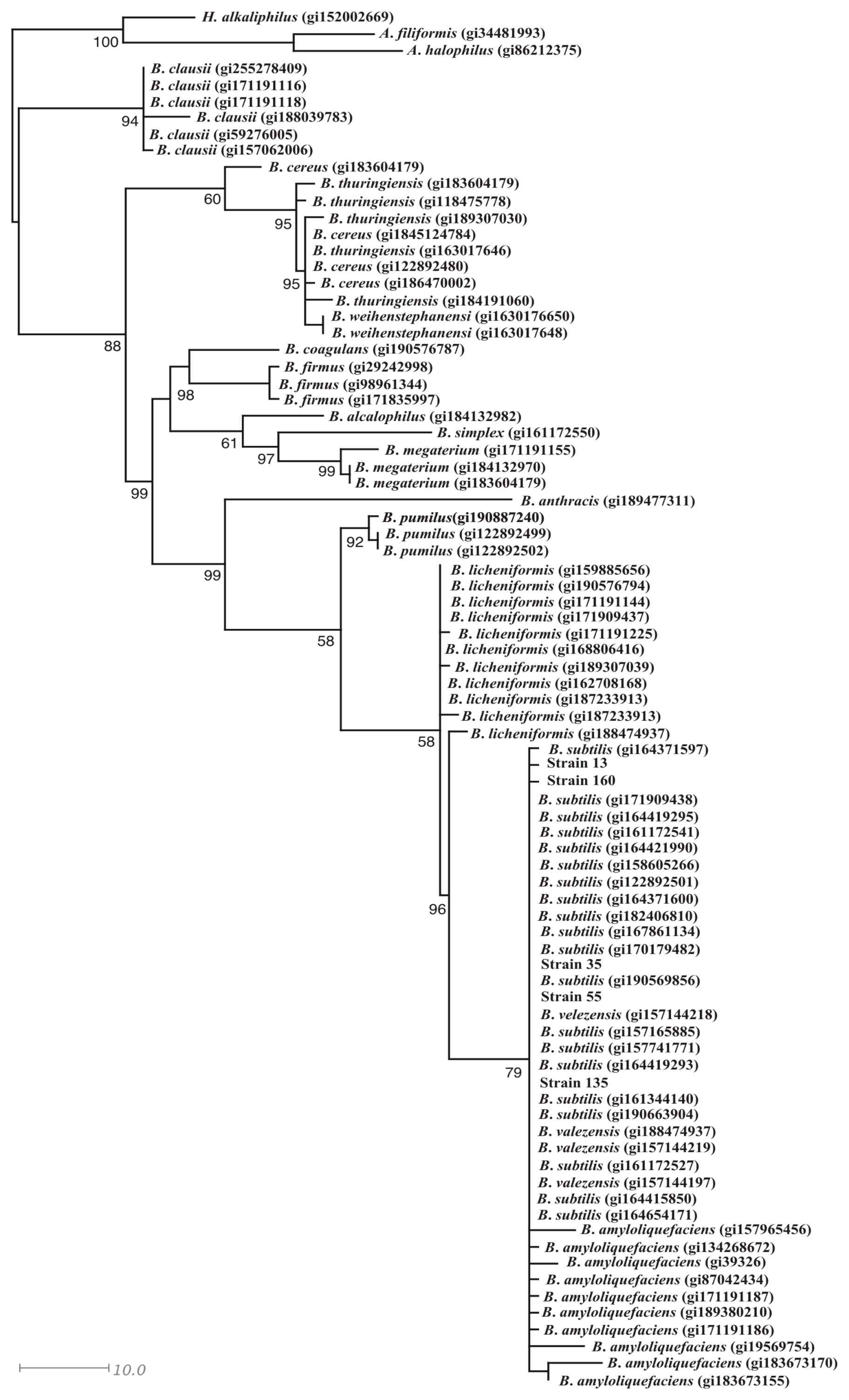 phylogenetic analysis of thermophilic bacteria On the basis of normal evolutionary distances, the phylogenetic tree indicates  that all bacteria investigated in this study with a maximum growth temperature.