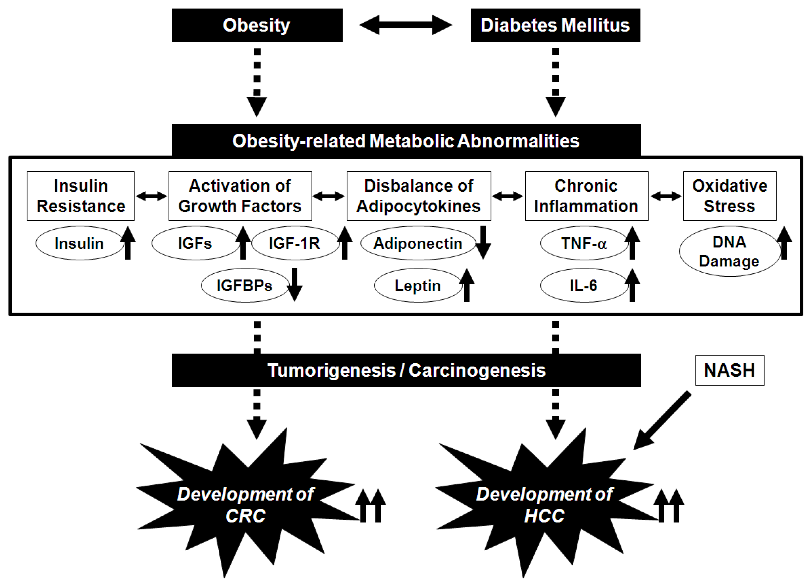 Ijms Free Full Text Nutraceutical Approach For Preventing Obesity Related Colorectal And Liver Carcinogenesis Html