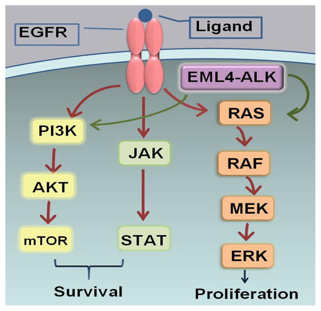 Ijms Free Full Text Personalized Targeted Therapy For