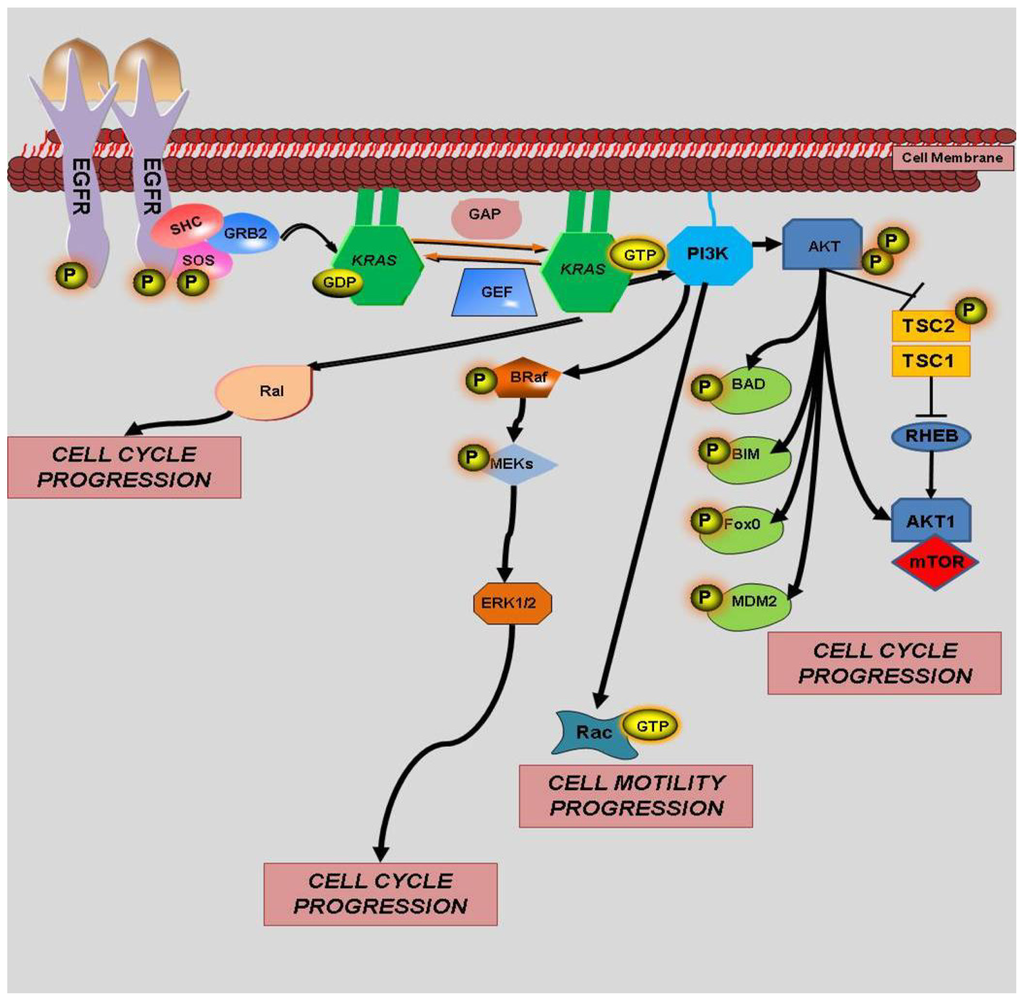 Ijms Free Full Text Prognostic And Predictive Roles Of Kras Mutation In Colorectal Cancer Html