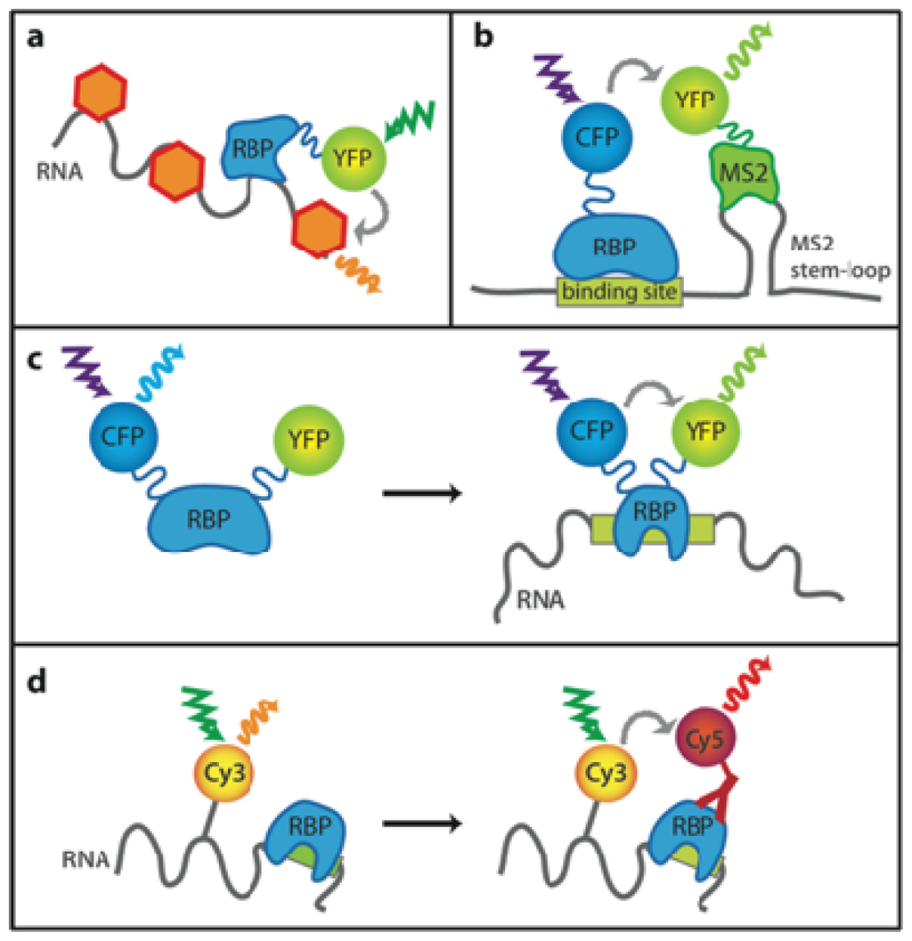 Probing Nucleic Acid Interactions
