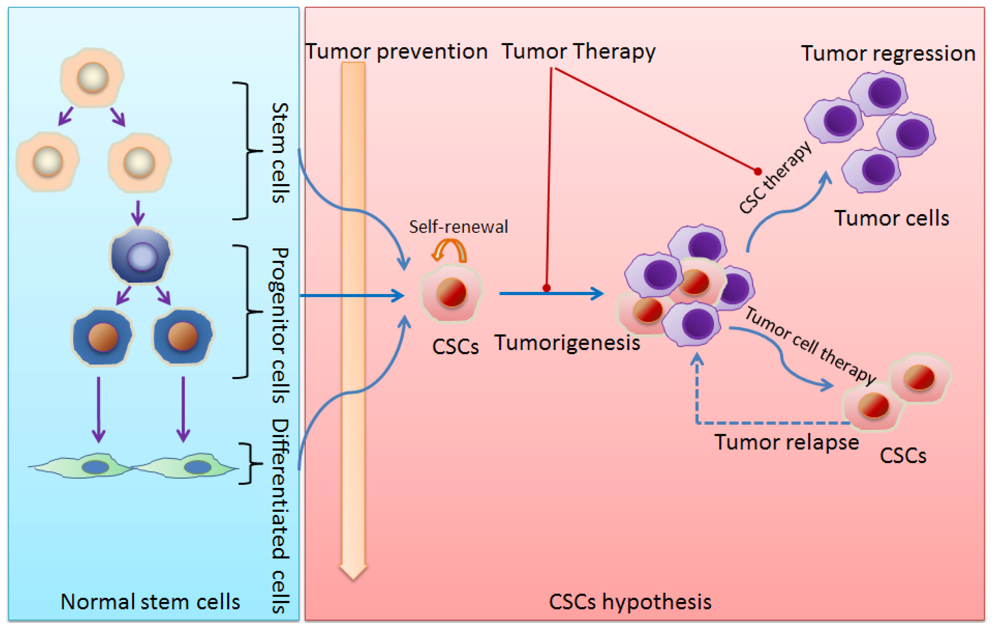 theory on the role of cancer The role of traditional chinese herbal medicines in cancer therapy - from tcm theory to mechanistic insights authors w l wendy hsiao, liang liu.