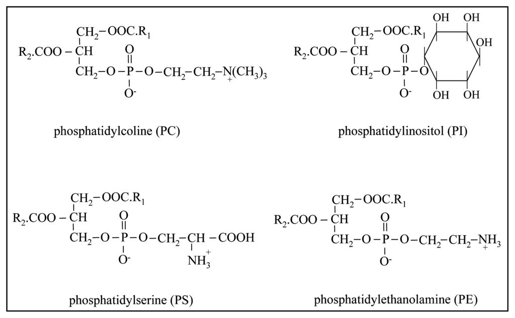 glycerophospholipids