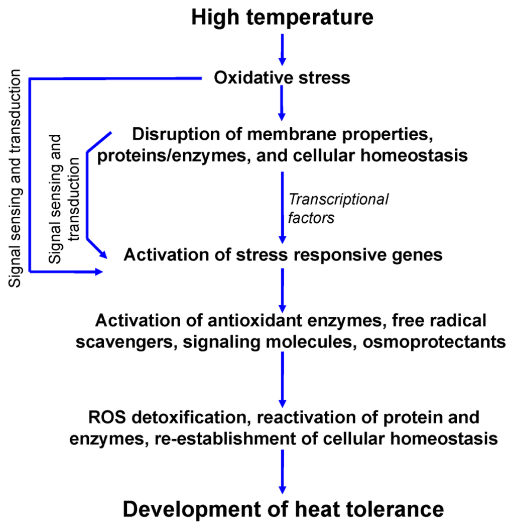 """high temperature tolerance in soybean Recent temperature changes on us maize and soybean production  improved high-temperature tolerance is suggested by a """"photorespiratory."""
