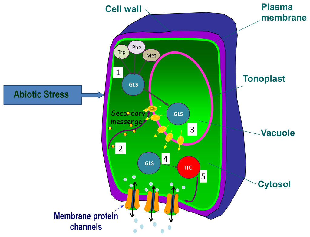 plant physiology research papers