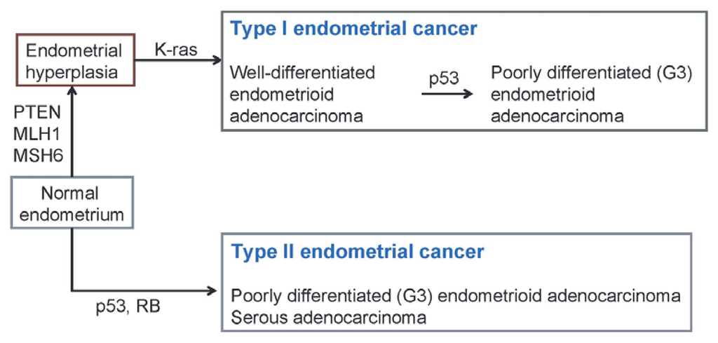endometrial cancer essay Papers presented at the 1990 annual meetings of the american radium society, scottsdale, arizona, april 21-25, 1990 tumor size in endometrial cancer.