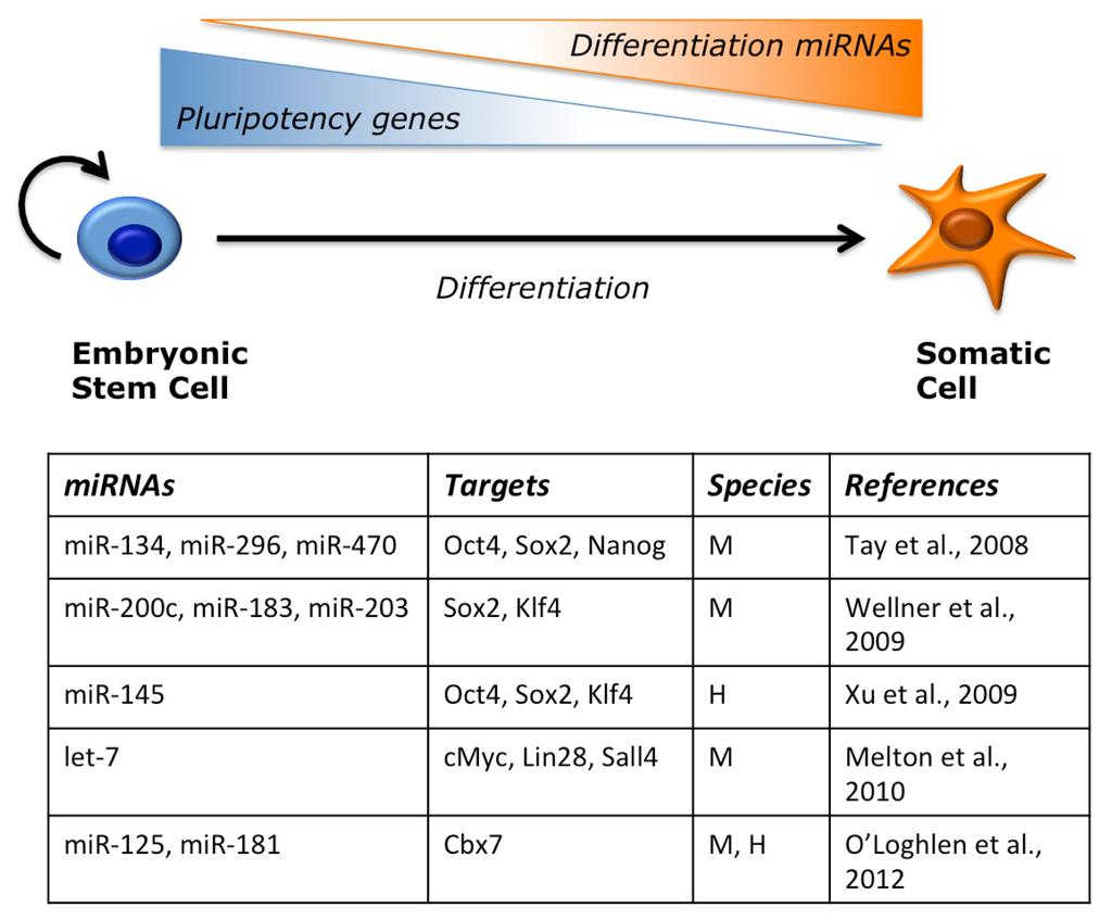 Vertebrate embryology a laboratory manual pdf