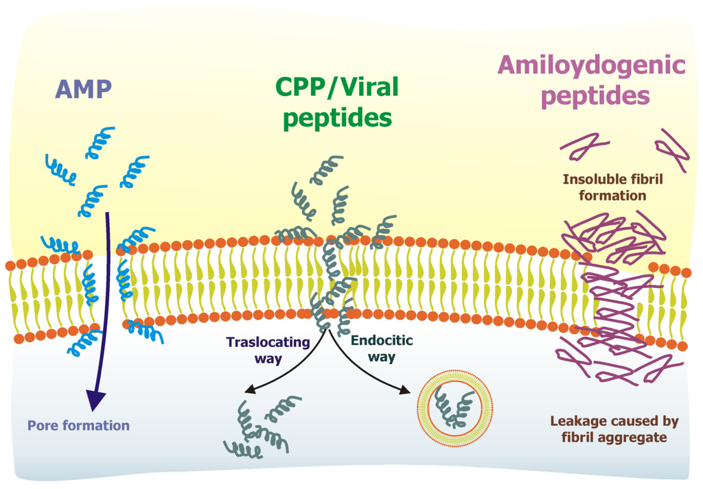 antimicrobial peptides amps for an antibiotic Thus, there is great demand for a continuous supply of novel antibiotics to  combat this problem bacteria-derived antimicrobial peptides (amps).