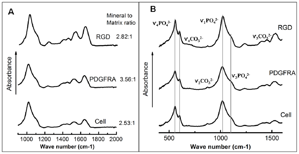 IJMS | Free Full-Text | Receptor-Targeted, Magneto-Mechanical ...