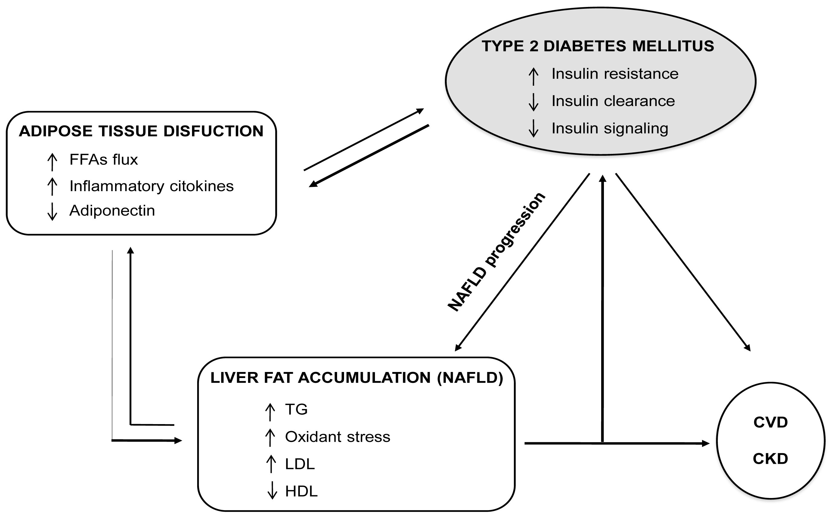 Ijms free full text nonalcoholic fatty liver a possible new no ccuart Gallery