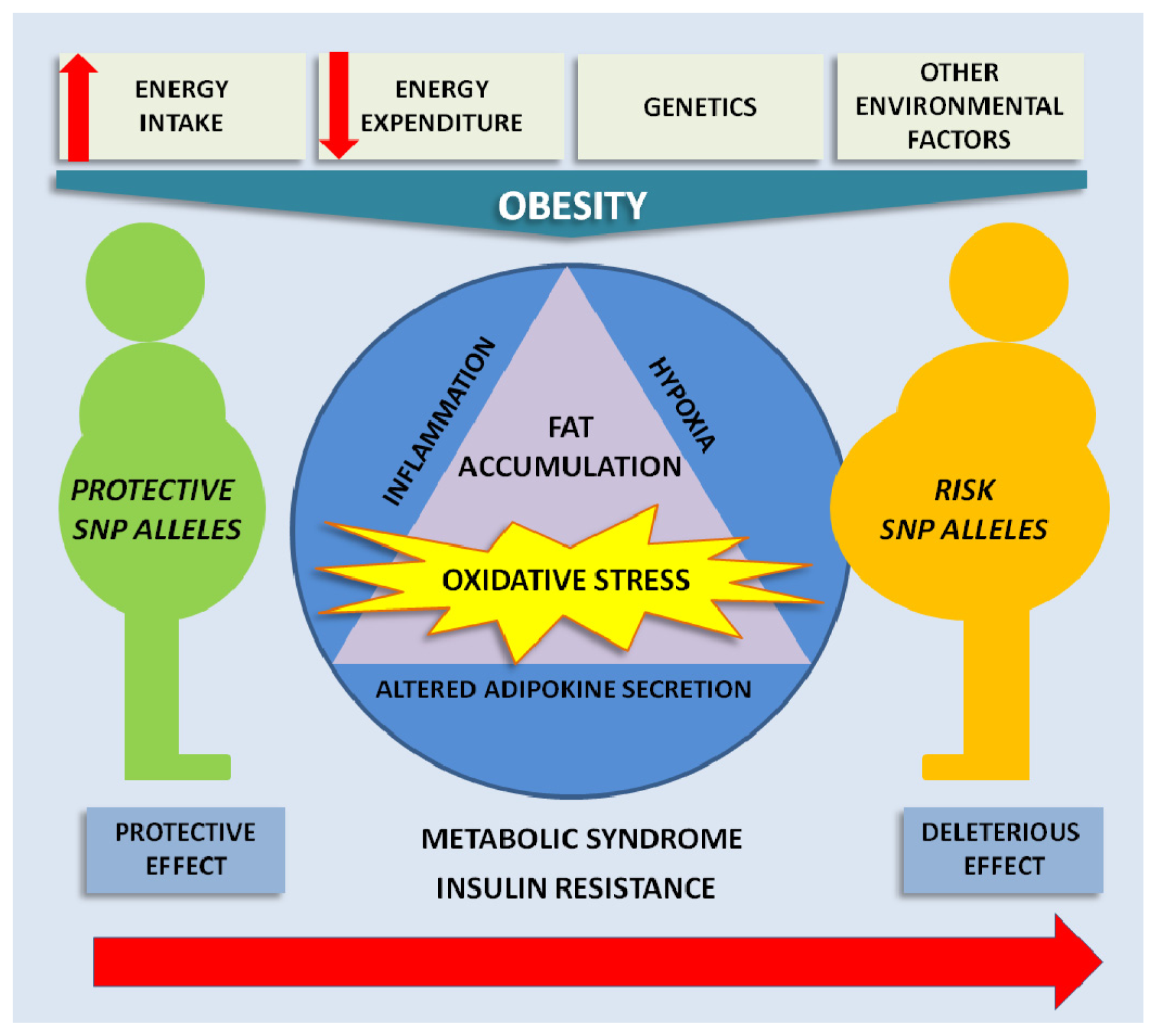 genetics of obesity Candidate gene studies based on the molecules known to cause severe obesity  in experimental animals have shown that these genes also.