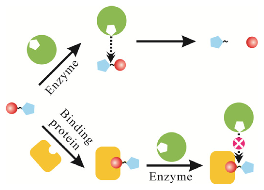 Methods for Detecting Protein–DNA Interactions