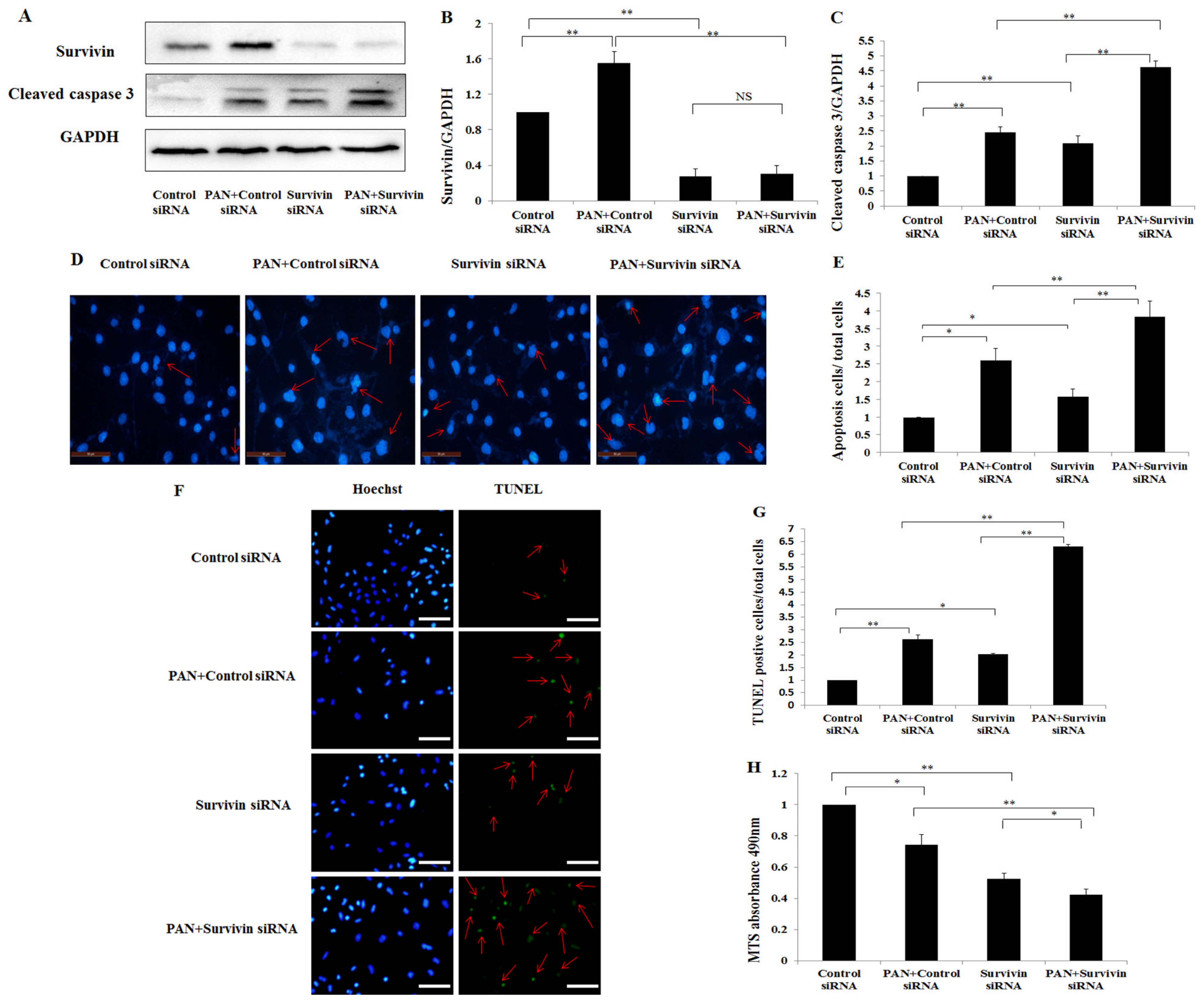 IJMS   Free Full-Text   The Role of Survivin in Podocyte