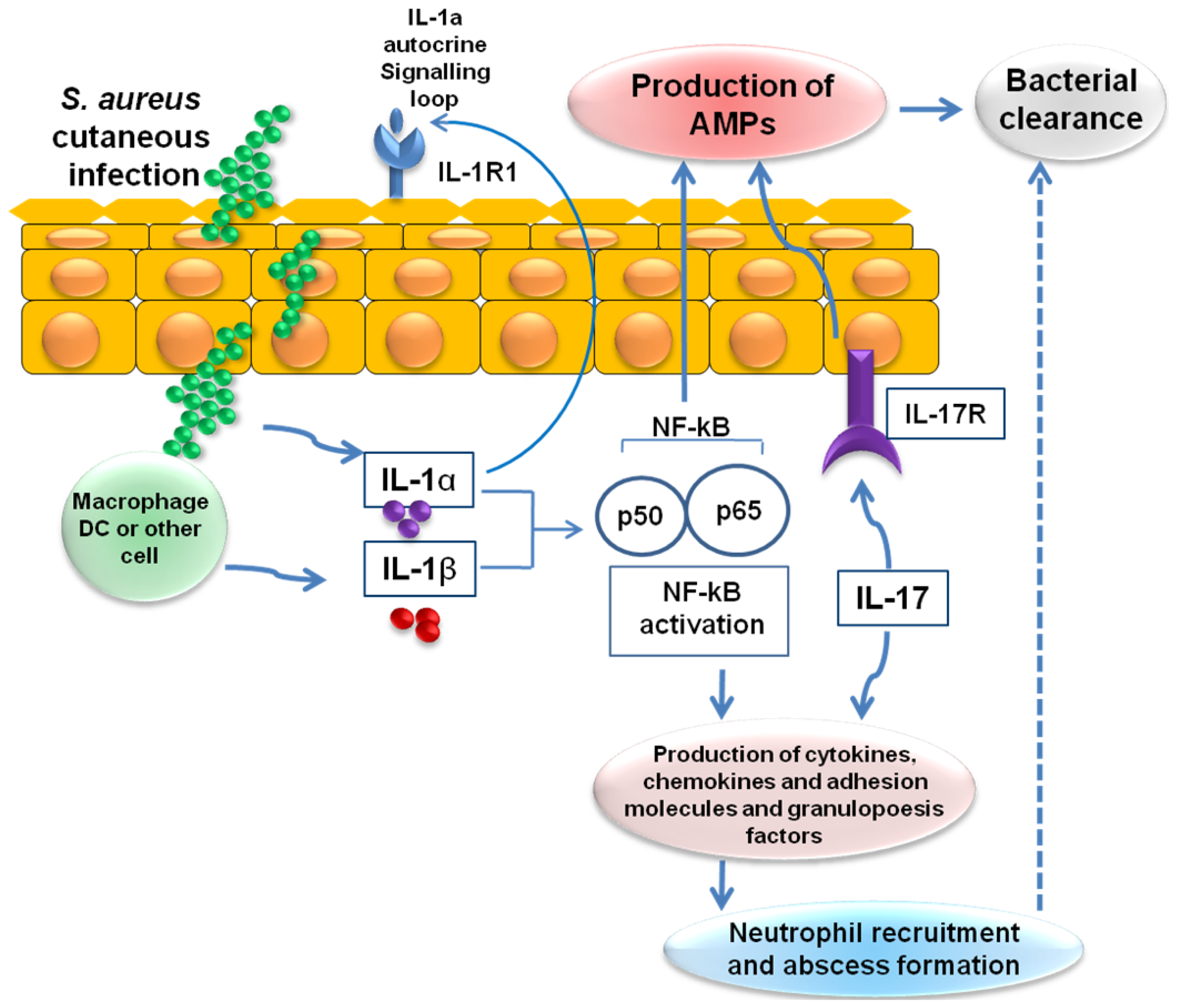 cationic antimicrobial peptides in humans Abstract objectives: cathelicidin ll37 represents one of the chemical  defence components of bladder epithelial cells that in- clude antimicrobial  peptides.