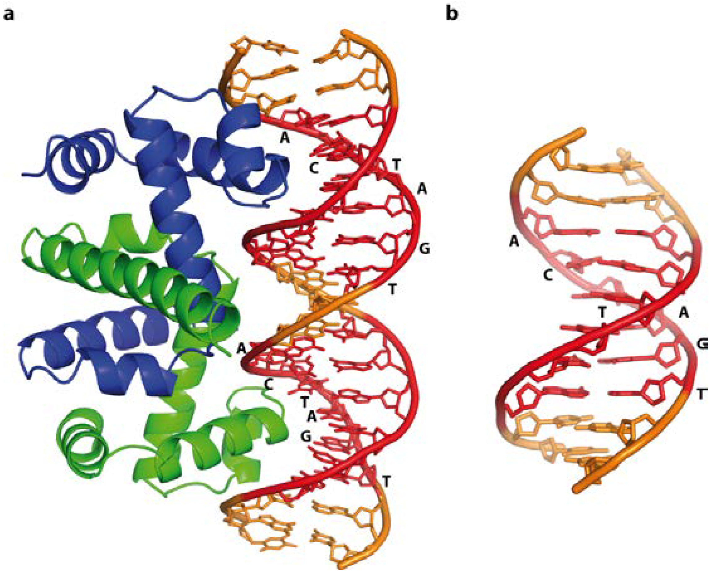 research paper on dna How can the answer be improved.