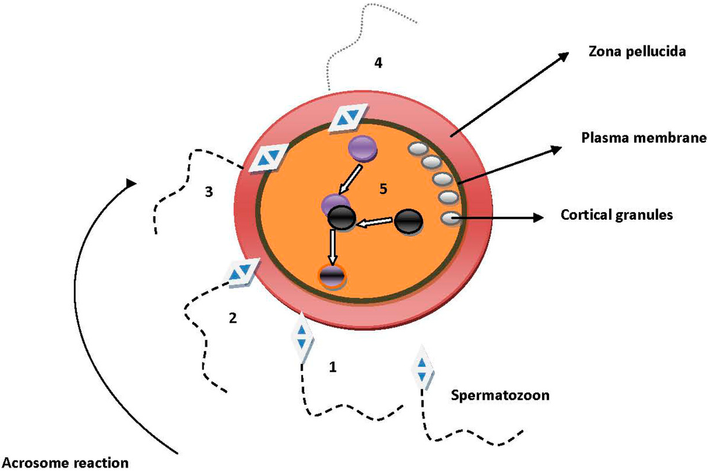 IJMS | Special Issue : Cellular and Molecular Mechanisms of