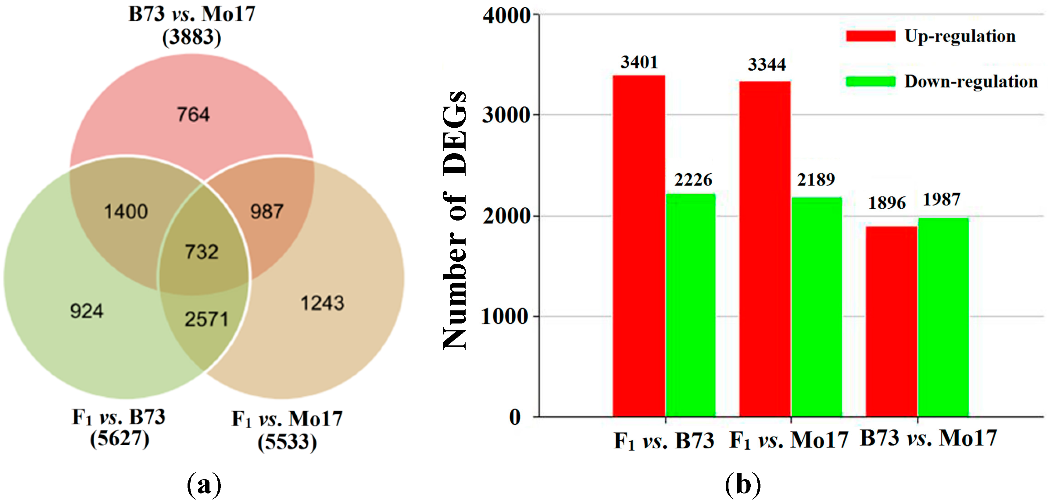 Ijms free full text heterosis in early maize ear inflorescence no ccuart Images