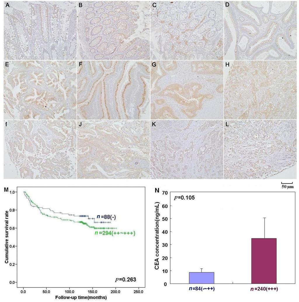 molecular biology of cancer pecorino pdf free download