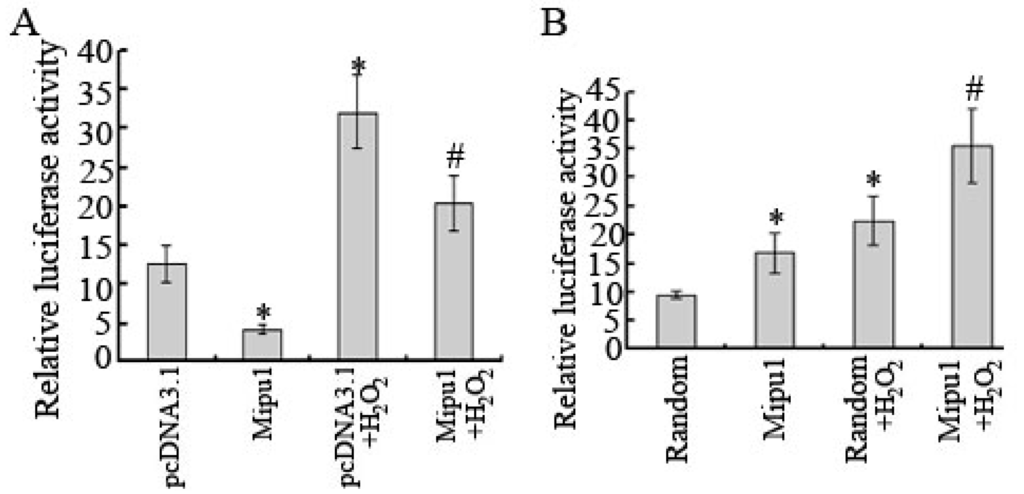 Ijms free full text mipu1 protects h9c2 myogenic cells from hydrogen peroxide induced - Unknown uses hydrogen peroxide ...