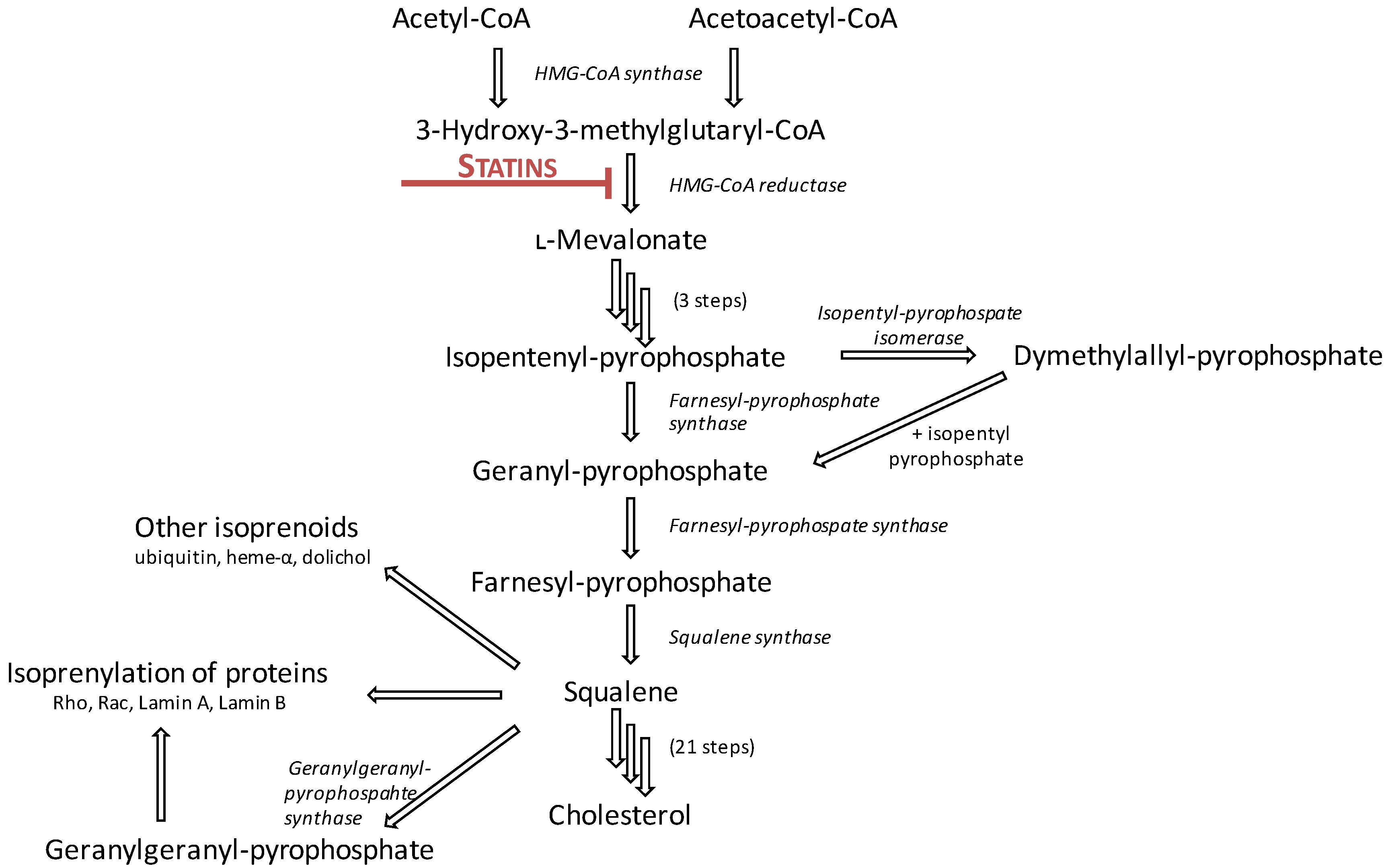 Ijms free full text molecular mechanisms underlying the no geenschuldenfo Gallery