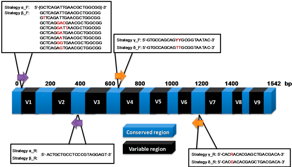 16s rrna sequencing