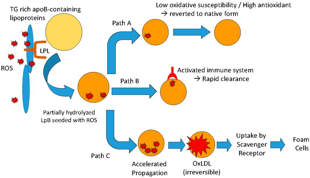 IJMS | Free Full-Text | Lipoprotein-Associated Oxidative Stress: A ...