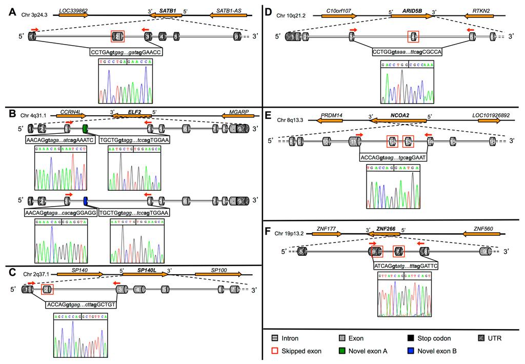 Eukaryotic Transcription Factors Novel Transcription Factor