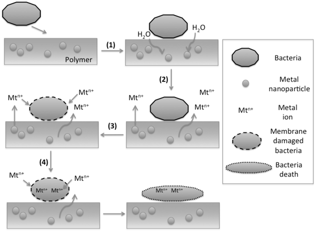 synthesis and antibacterial activity of silver The antibacterial activity of silver species has been well known since ancient times (holt and bard 2005 shrivastava et al 2007) and it has been demonstrated that, in low concentrations, silver is non toxic to human cells (zhang et al 2003 pal et al 2007.