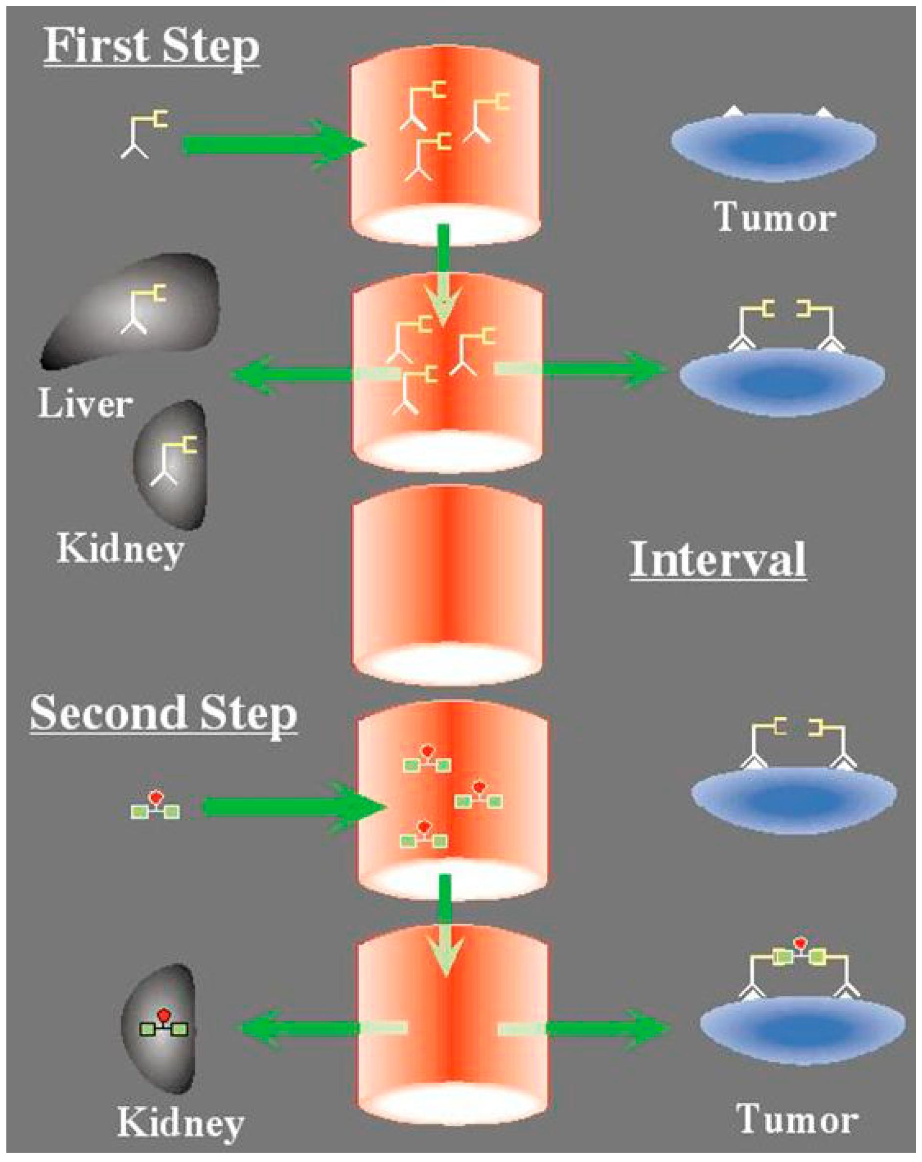 IJMS   Free Full-Text   Tumor Immunotargeting Using