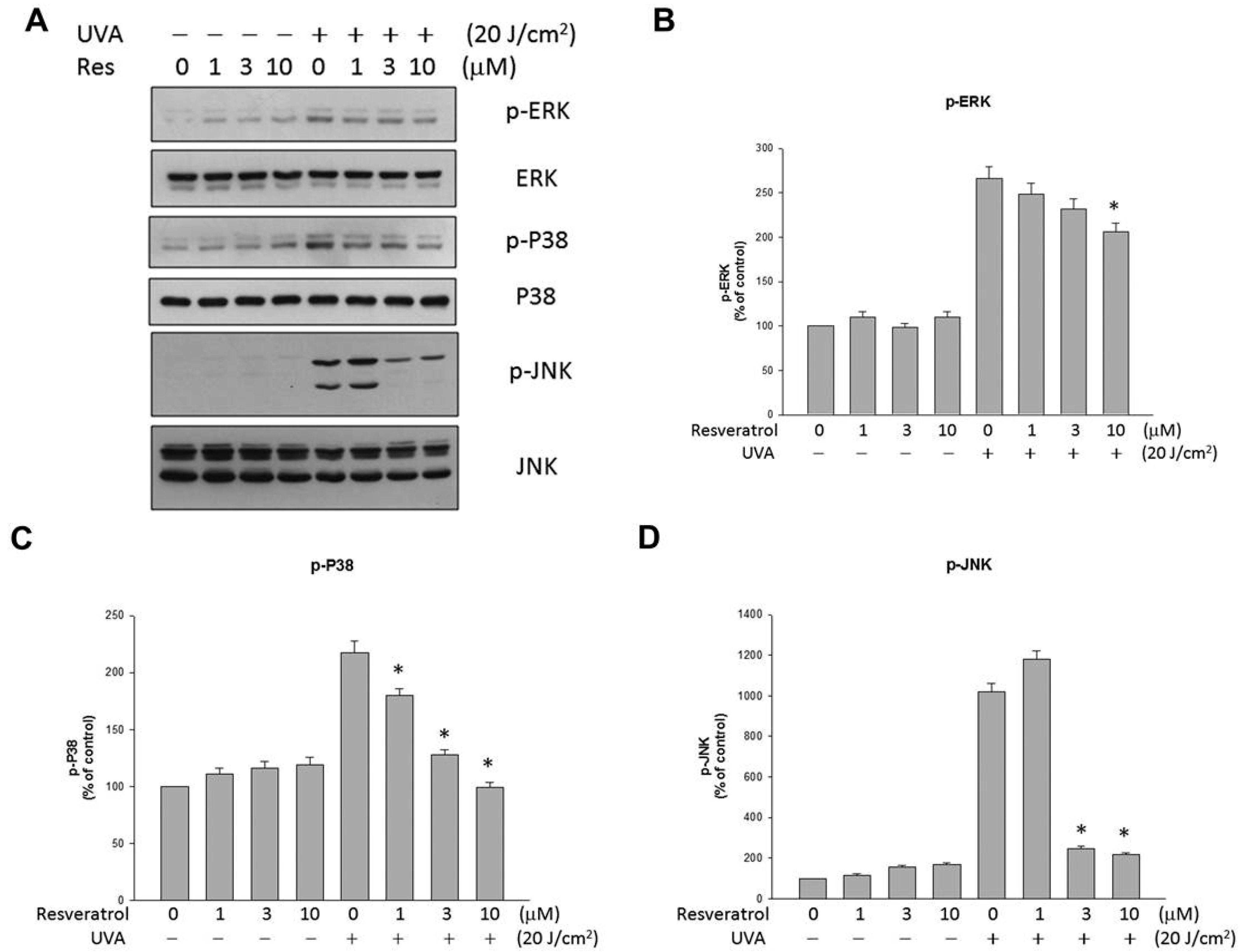 protective effect of resveratrol Permalink: titel: protective effect of resveratrol and quercetin on in vitro-induced diabetic mouse corpus cavernosum.