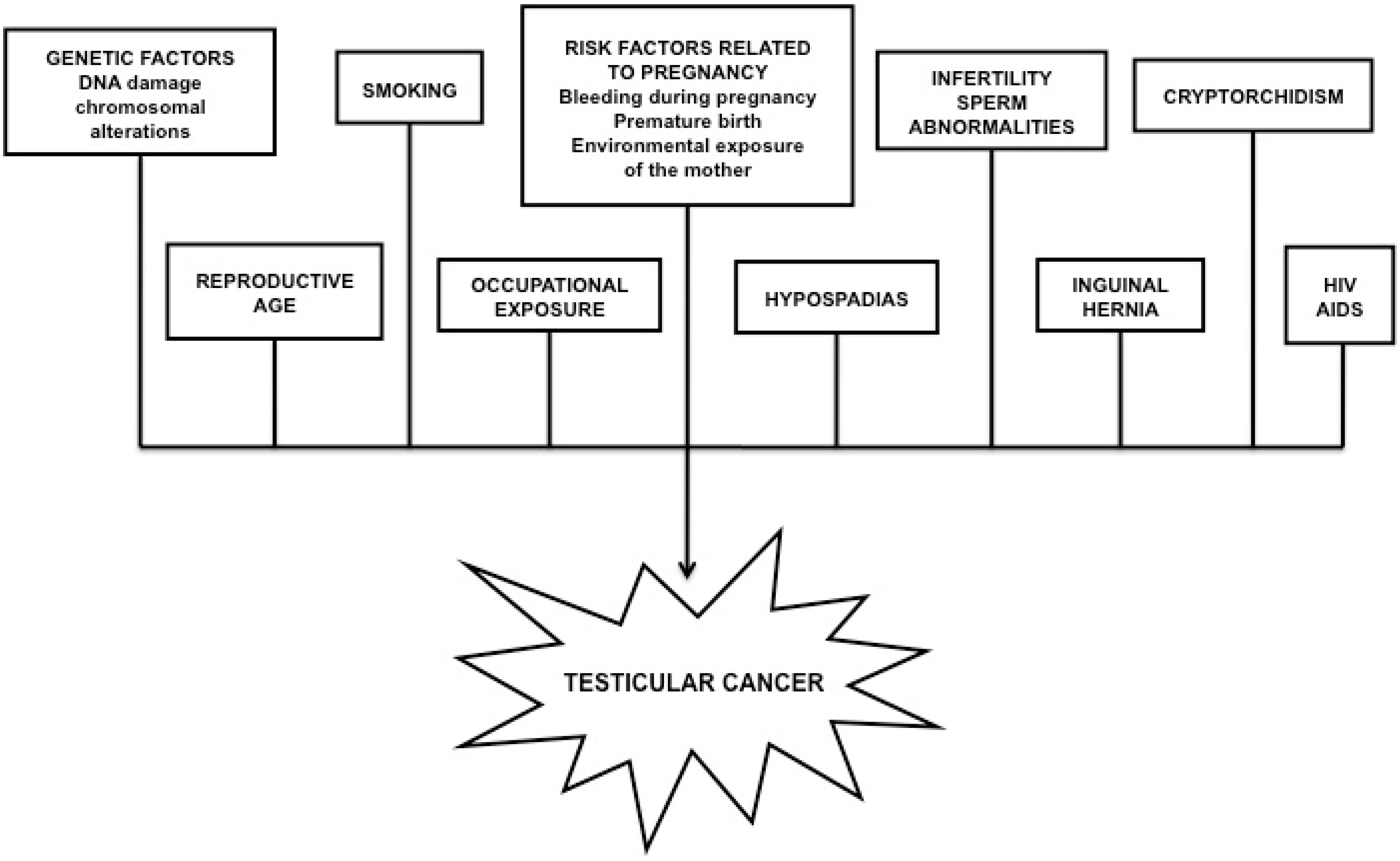 IJMS | Free Full-Text | Male Reproductive Cancers and