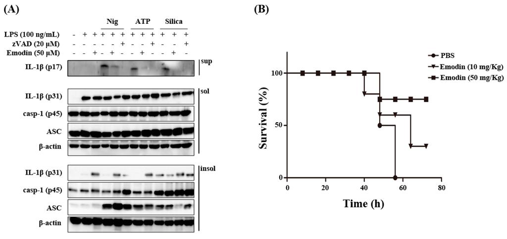 IJMS | Free Full-Text | Anti-Inflammatory Effect of Emodin via ...