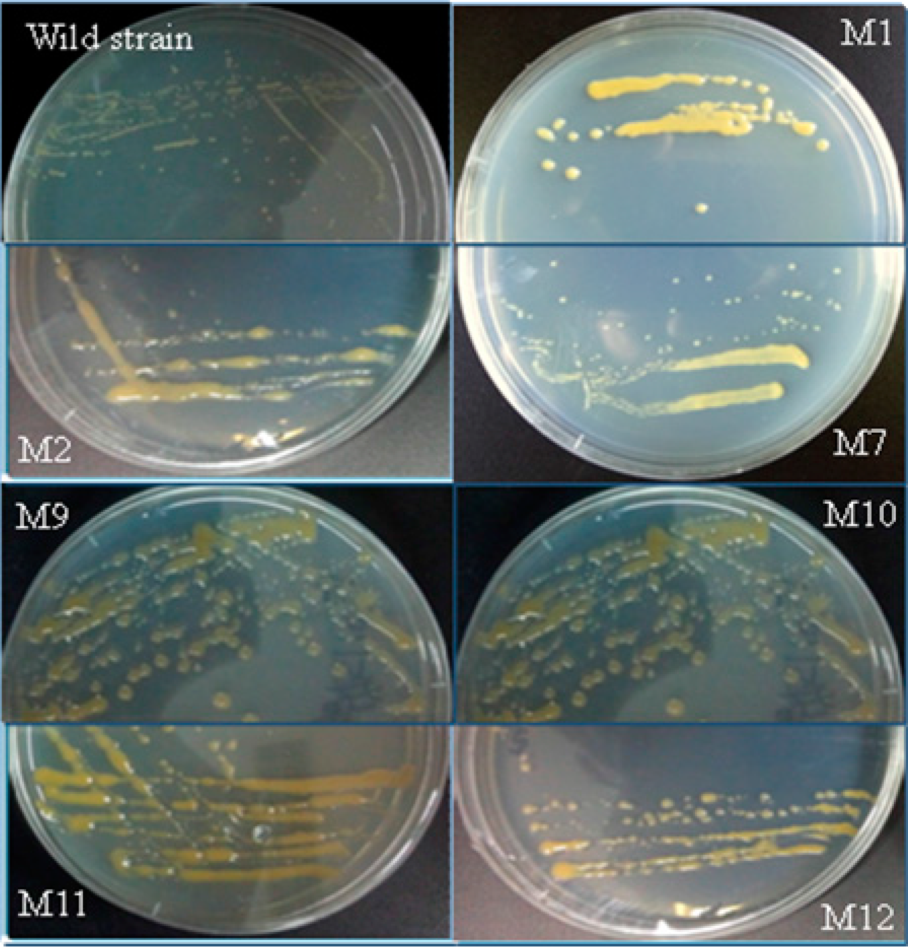 | Breeding Mutation Full-Text Free Extracellular | of IJMS