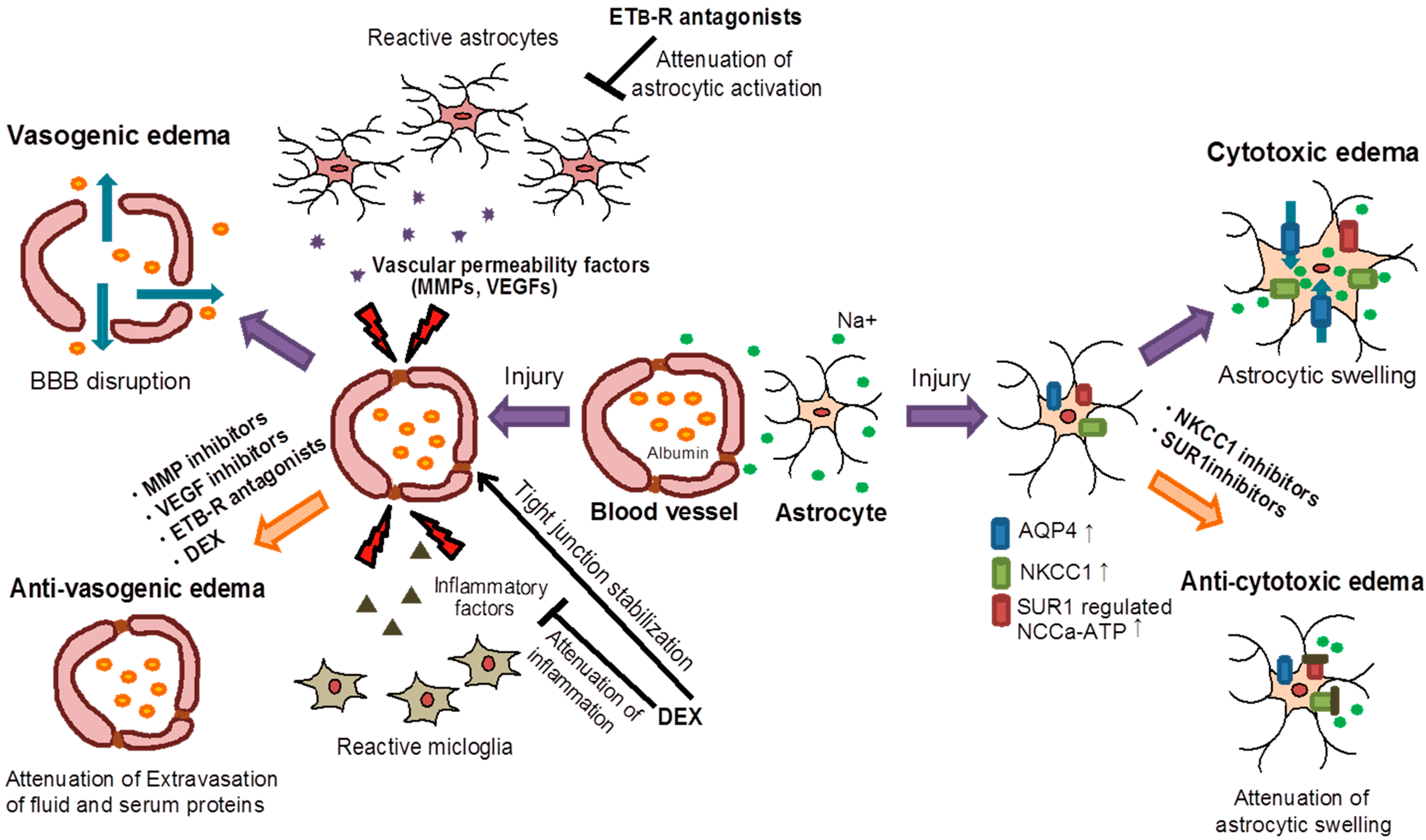 Steroids in vasogenic edema sprinter steroids cycle