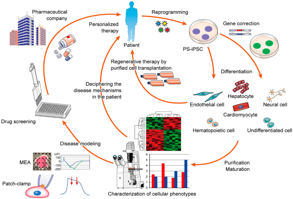 Patient-Specific Induced Pluripotent Stem Cell Models: Generation and Characterization