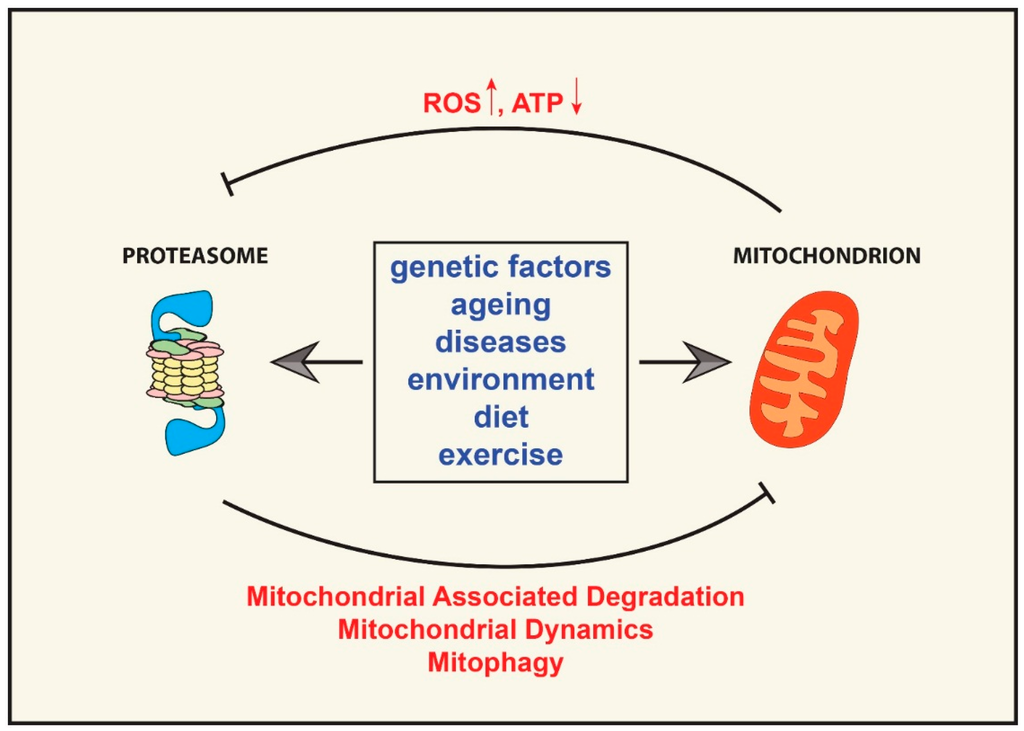Oxidative Medicine and Cellular Longevity