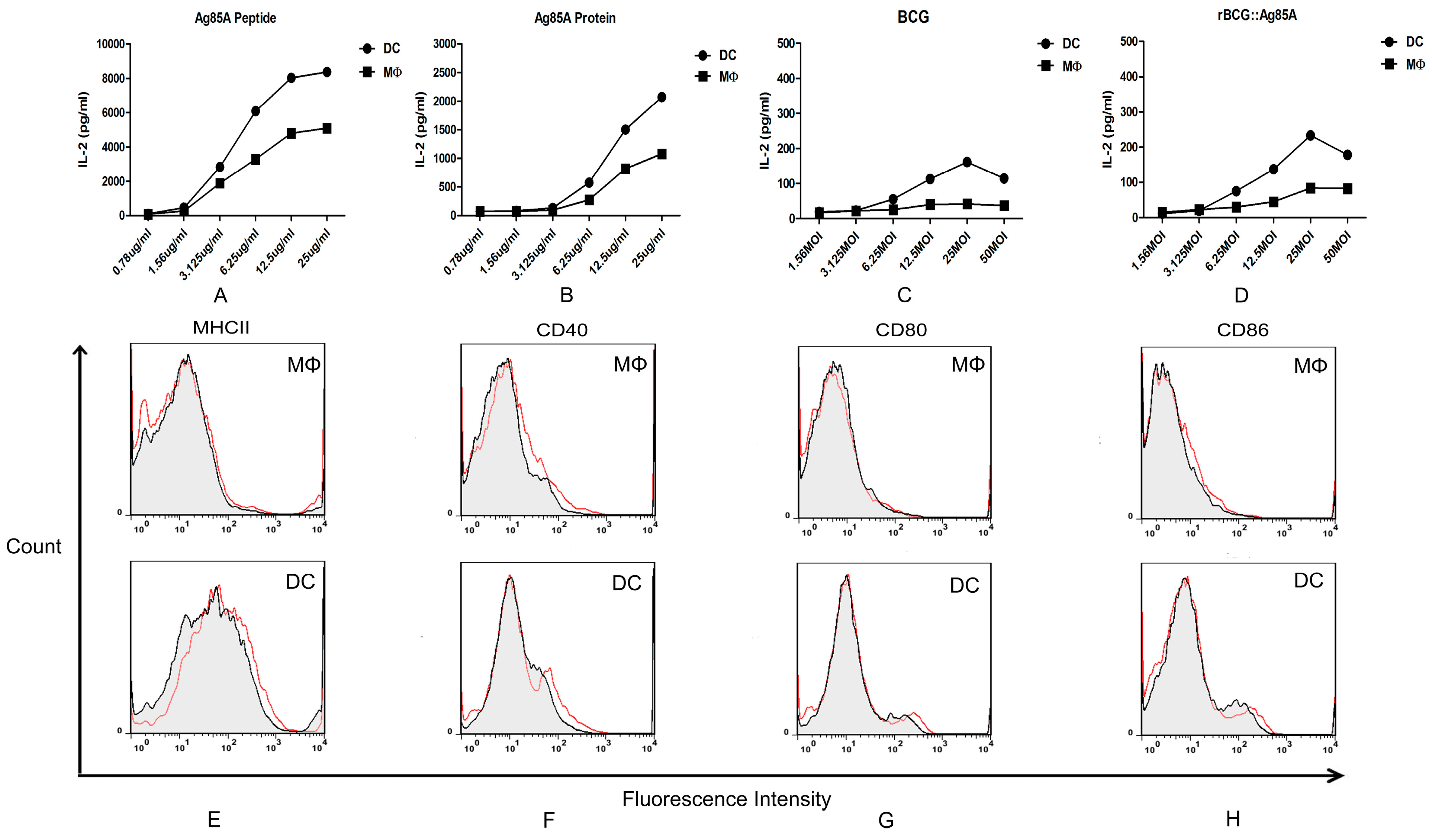 IJMS | Free Full-Text | Differential Effects of Mycobacterium bovis
