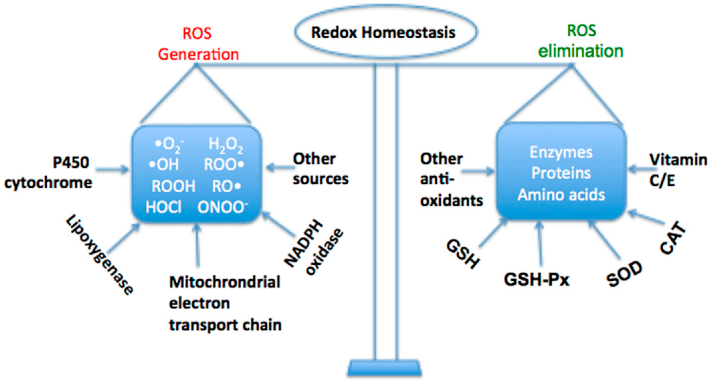 Ijms Free Full Text The Role Of Oxidative Stress And