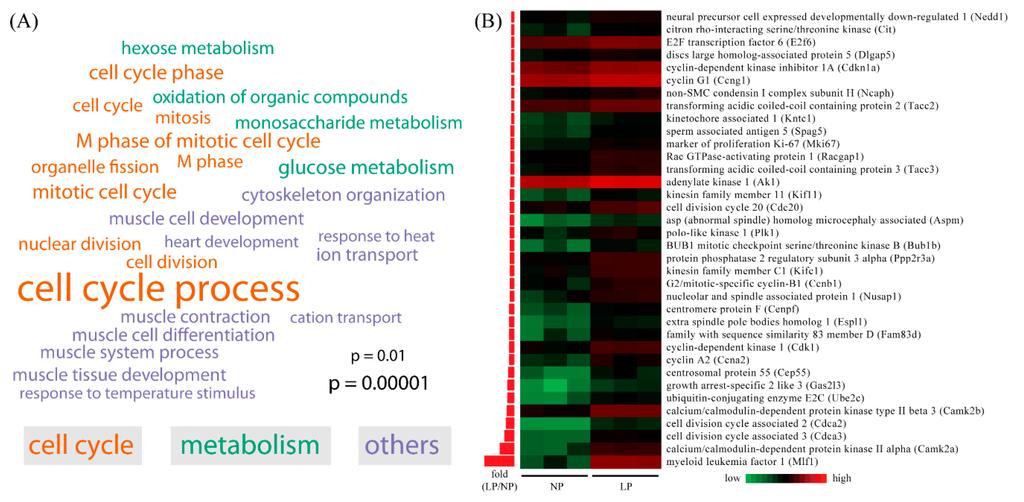 R Gene Ontology Enrichment Analysis Essay - image 4